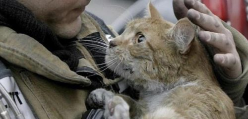 firefighter with cat