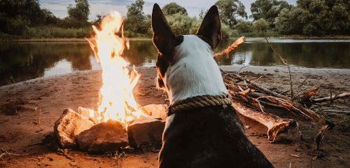 dog near bonfire