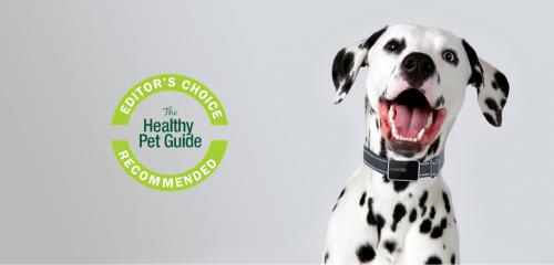 Dalmatian dog wearing a pawfit pet tracker