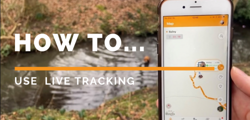 HOW TO: Use Pawfit Live Tracking