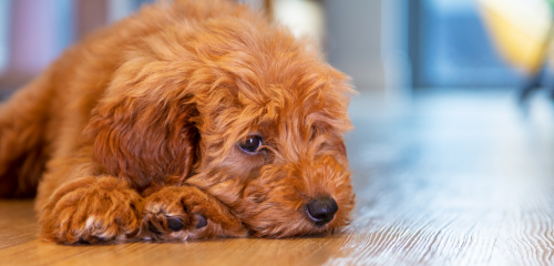 How to manage anxiety in dogs